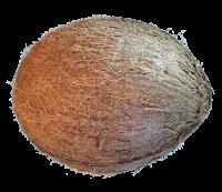 Coconut 02